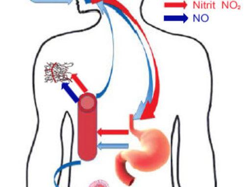 Wie wird Nitrat zu NO (Nitric Oxide)?