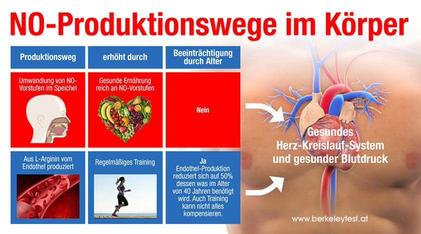 Stickstoffmonoxid (NO)-Produktionswege im Körper. Es gibt zwei Wege: Einerseits über die Umwandlung von NO-Vorstufen im Speichel und andererseits aus L-Arginin vom Endothel produziert. Die Umwandlung über den Speichel wird erhöht durch die Aufnahme von Gemüse, das reich an NO-Vorstufen ist. Diese Art der Produktion ist durch das Alter unbeeinträchtigt. Die Produktion aus Arginin im Endothel wird erhöht durch regelmäßiges sportliches Training, lässt aber im Alter nach. Die Endothel-Produktion reduziert sich auf 50% dessen, was im Alter von 40 Jahren benötigt wird. Auch Training kann nicht alles kompensieren.